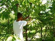 Gemüse- und Früchte Produzent