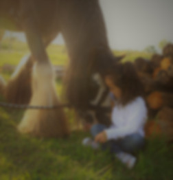 le cheval révélateur de l'âme écurie Sonjah équithérapie Montpellier