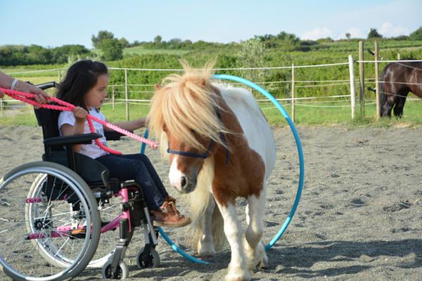 equifeel handi , thérapie assistée par le cheval occitanie  écurie sonjah