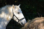pension chevaux montpellier