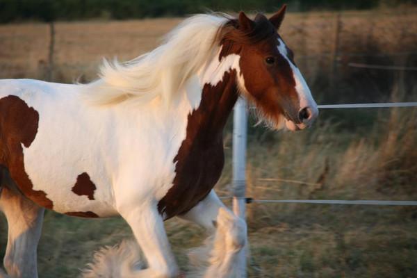 relaxation et cheval écurie sonjah