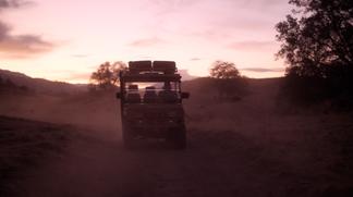 Tuatara at Dawn