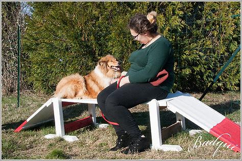 éducater canin ambert 63 chaise dieu 43
