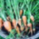 Creme de la Crop Leann Landgrebe Carrots