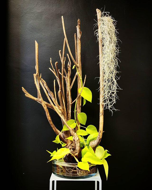 Mangrove. 2020.  #atelier #corentinpfeif
