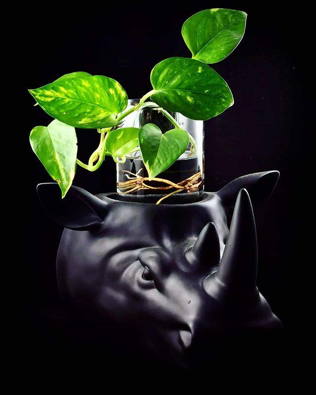 Hydro Rhino 🦏._2020.jpe