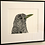 Thumbnail: Blackbird