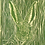Thumbnail: Hare in grass