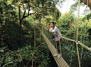 taman-negara-canopy-walk.jpg