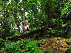 Belum Rainforest Trekking