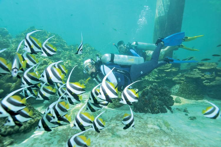 Pulau Payar Marine Park Scuba Diving
