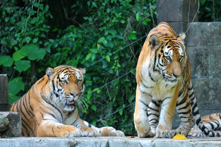 Lost World of Tambun Tiger Valley