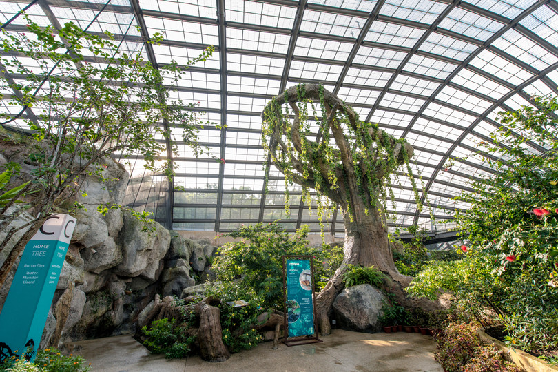 Penang Entopia Home Tree