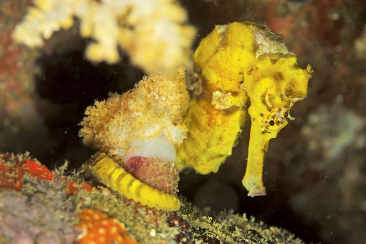 Pulau Payar Marine Park Marine Life