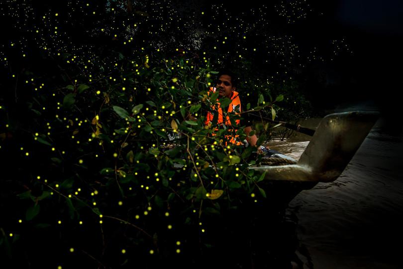 Kampung Kuantan Fireflies