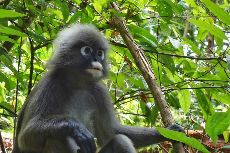 The Habitat Monkey