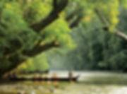 taman-negara-lata-berkoh-1.jpg