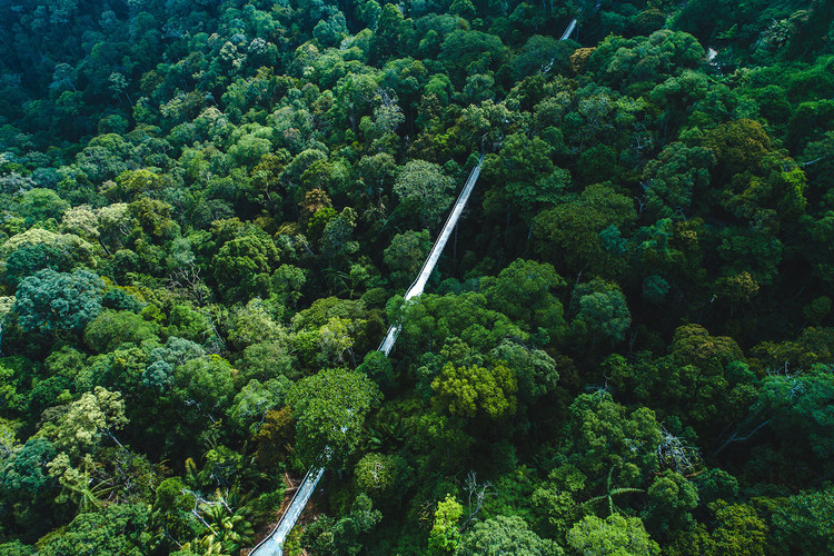 The Habitat Canopy Walk