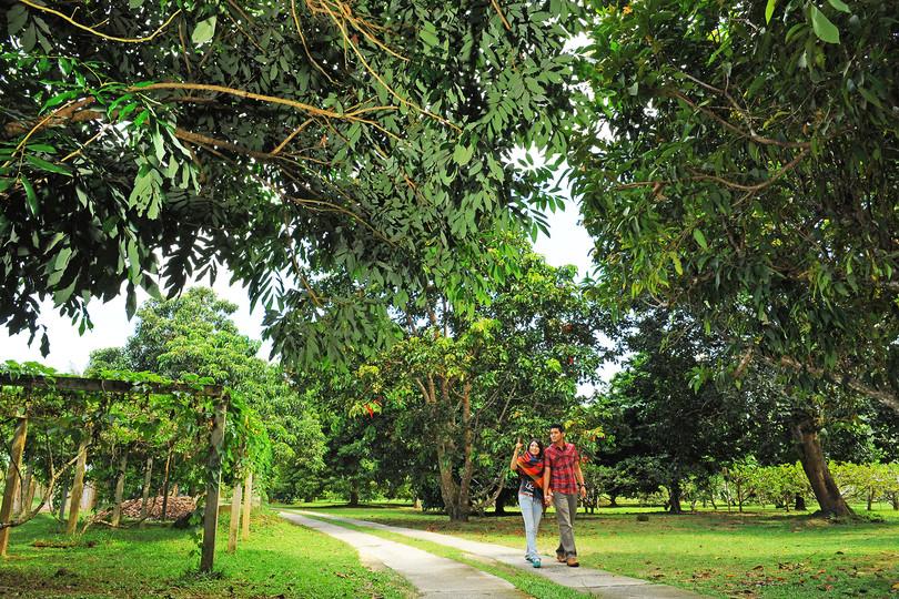Penang Tropical Fruit Farm