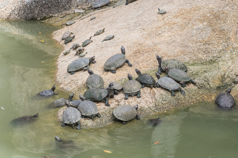 Penang Kek Lok Si Pond of Longevity