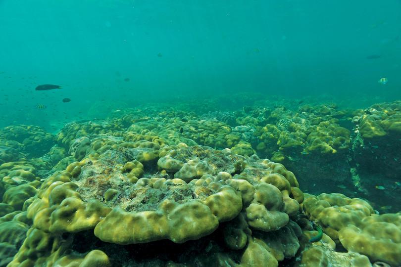 Pulau Payar Marine Park Corals
