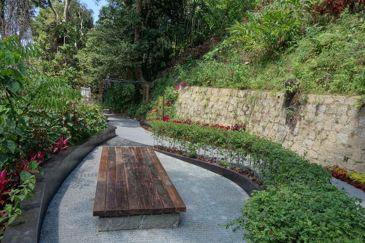 The Habitat Fern Garden