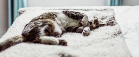 Understanding your cat's sleep cycle