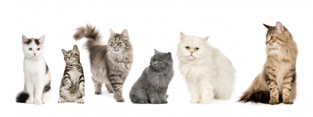How to make your cat some more furry friends