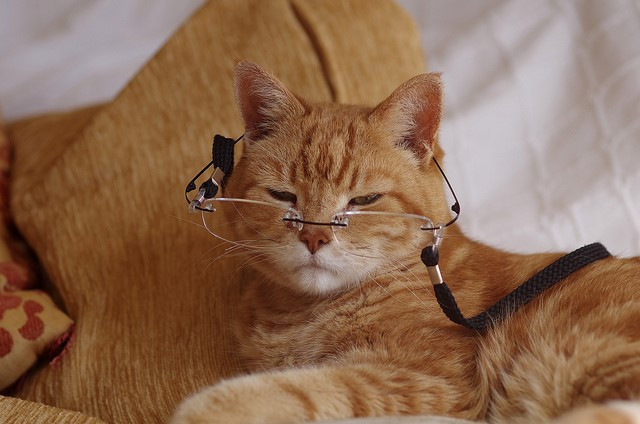 Key points to remember when taking care of older cats