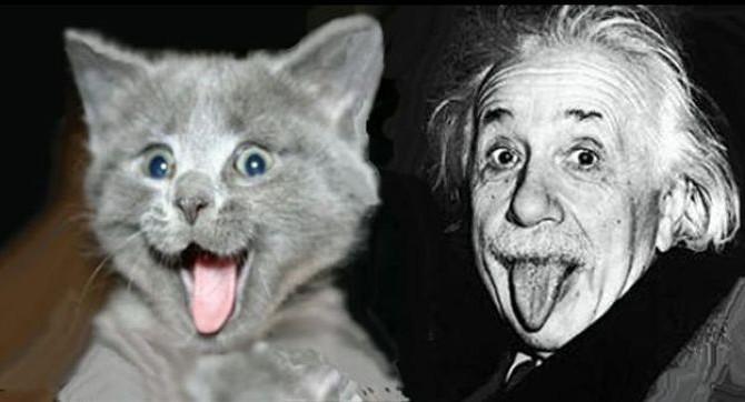 Is your cat the next Einstein?