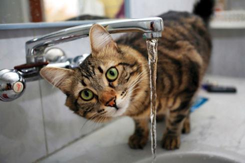 Decoding your cats behaviour