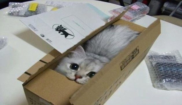 Cats who got themselves into very sticky situations