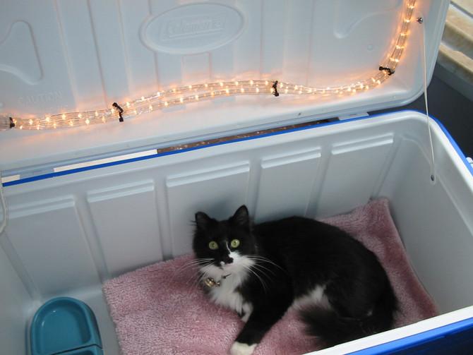 Make your outdoor cat an indoor cat