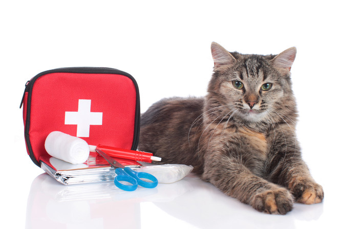 Basic first aid for your cat
