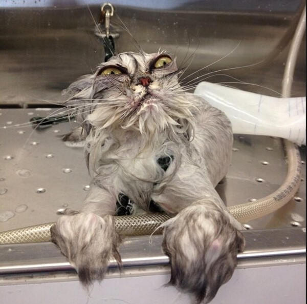 Is your cat a fussy groomer?
