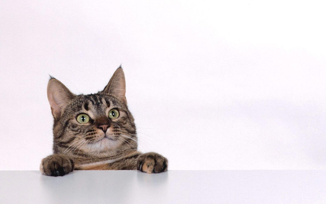Household items that are toxic to your cat