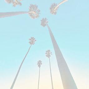 palms_edited_edited.jpg