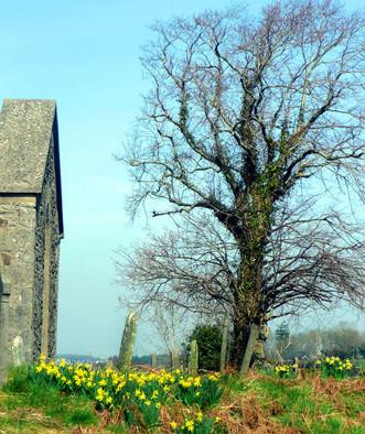 Irish-presidents-cemetery1.jpg