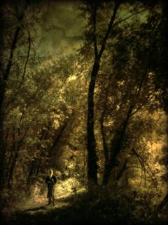 In Solitude Wander