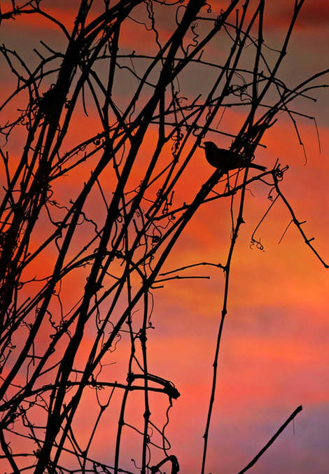 The Small Birds of Evening