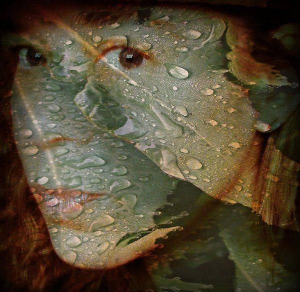 Self Portrait as a Thistle in the Rain
