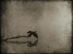Cormorant in Fog