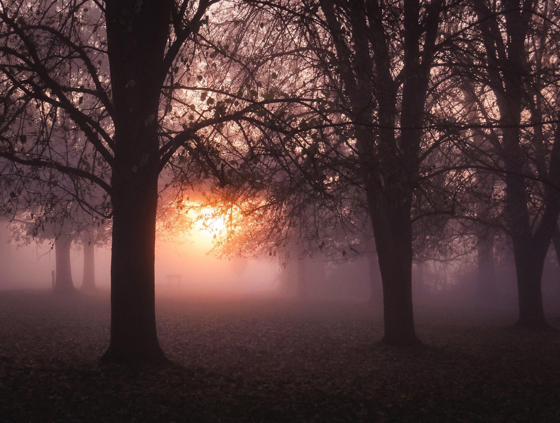 Sun rising through morning fog