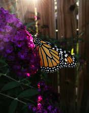 Autumn's Wings