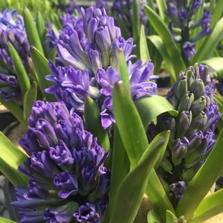 COLONIAL_Flowers6.jpg