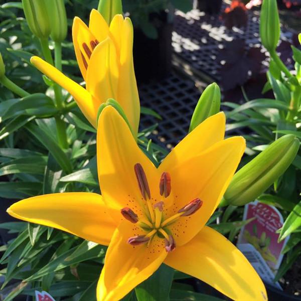 COLONIAL_Flowers4.jpg