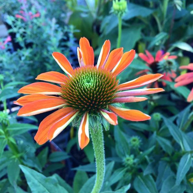 COLONIAL_Flowers5.jpg