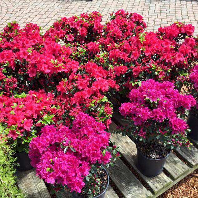COLONIAL_Flowers3.jpg