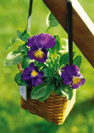 COLONIAL_Flowers2.jpg