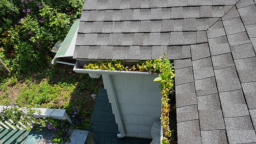 20150728_105542gutter-growing-trees-larg